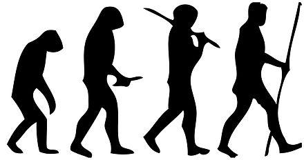 440px-Human_evolution_scheme_(2)